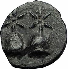 DIOSKOURIAS in KOLCHIS 105BC Mithradates VI Time Greek Coin GEMINI Hats i58412