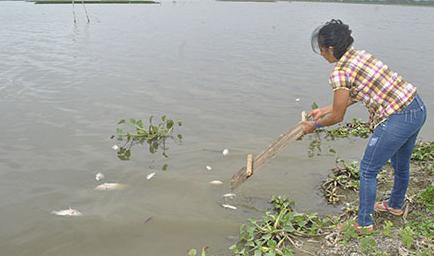 Dead fish appear in The Segua