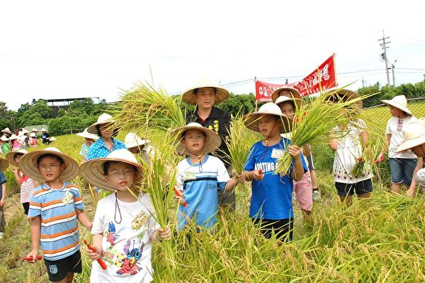 農村體驗才知米飯好吃 | 稻米 | 體驗營 | 大紀元