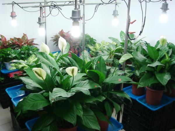 選對室內植物淨化空氣 這6種好熱門 | 大紀元