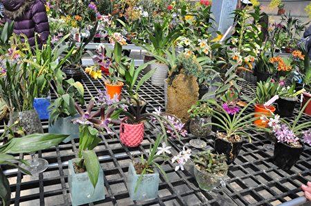 種出奇蹟 邱大展將廢玻璃變成環保花盆 | 文創工作者 | 大紀元