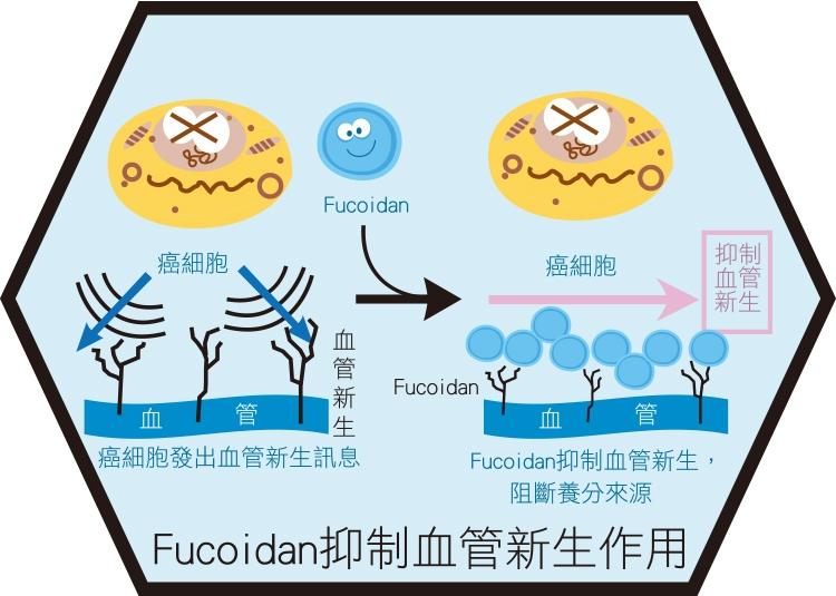 臺灣小分子褐藻醣膠 高穩定藻褐素 報導