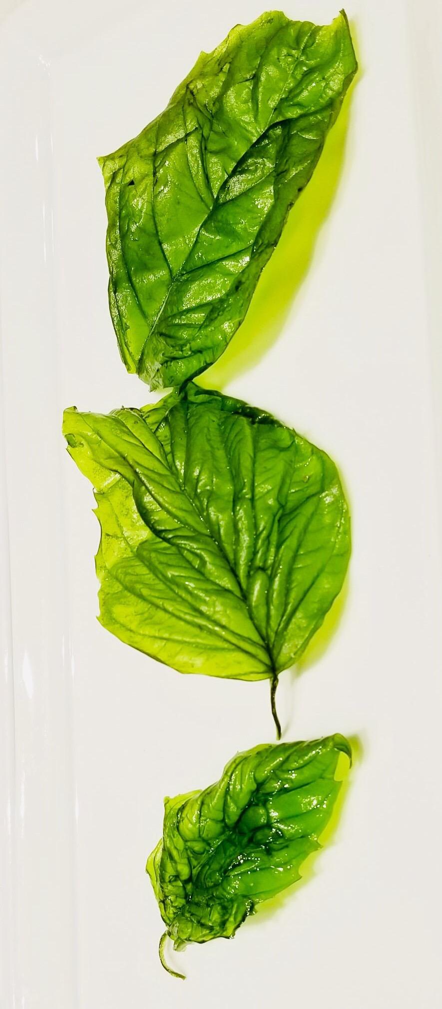 3種常用草本的食療功效   勤媽媽   百里香   羅勒   大紀元