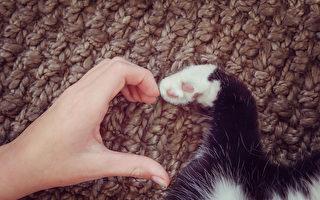 【貓的二三事】飼主必學! 教你輕鬆清除貓尿   寵物   貓咪   喵星人   大紀元