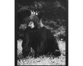 King Of The Forrest - Bear - Framed poster
