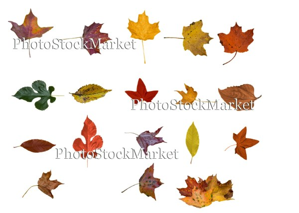 fall leaves png # 22