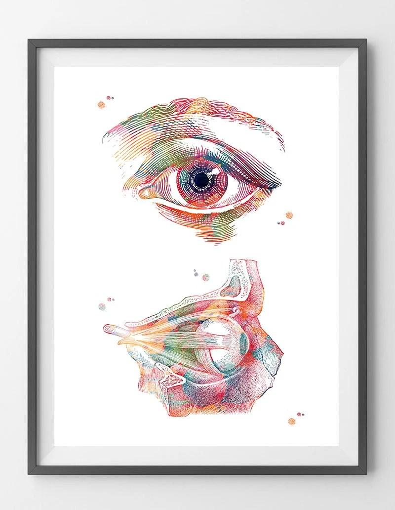 eye anatomy watercolor print