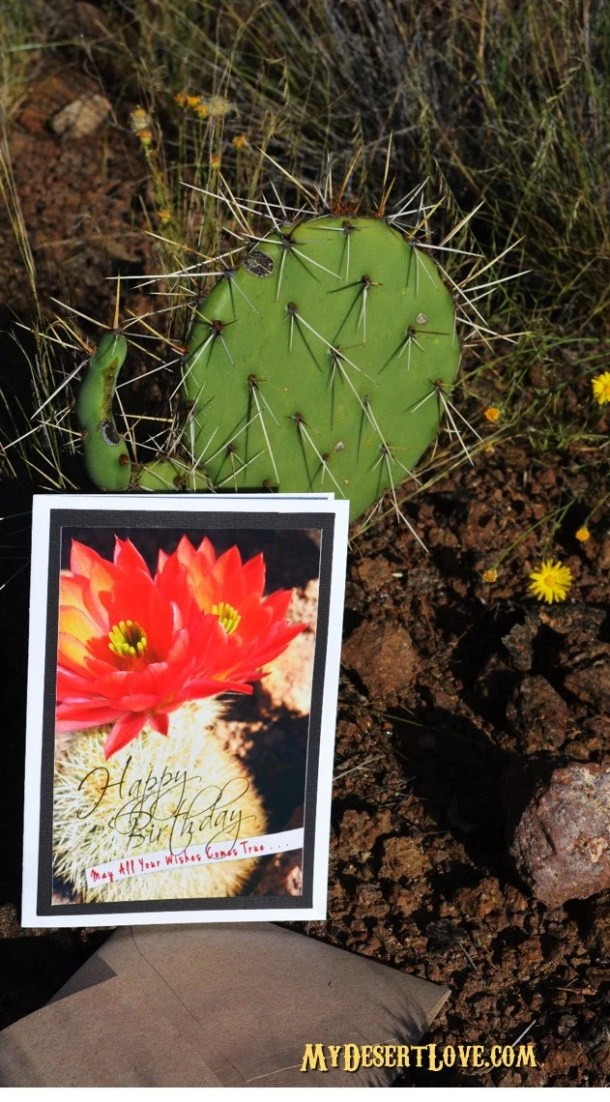 Happy Birthday! Cactus Wi...