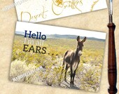 Hello I'm All Ears - ...
