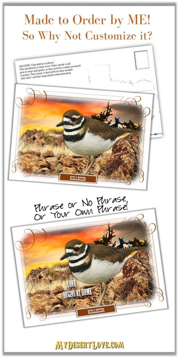 Killdeer Bird Photo Print...
