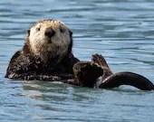 "Sea Otter - 8""x12"" Signed Metal Print"