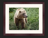 Blonde Grizzly - 12x16 Framed Print