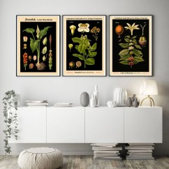 Art For The Kitchen Backsplash Ideas Etsy Rare Botanical Posters Set Of 3 Black Prints Decor Plant Eco Wbblot 1 6