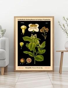 Black botanical print vintage german chart pepper wall art educational on background wb blbot also rh wallartem