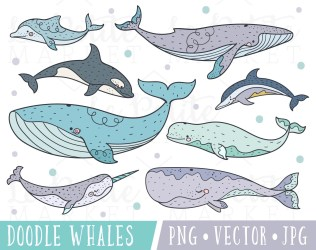 Cute Whale Clipart Images Beluga Whale Clipart Orca Clipart Etsy