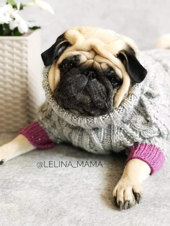 Sweater For Pug : sweater, Clothes, Knitted, Sweater