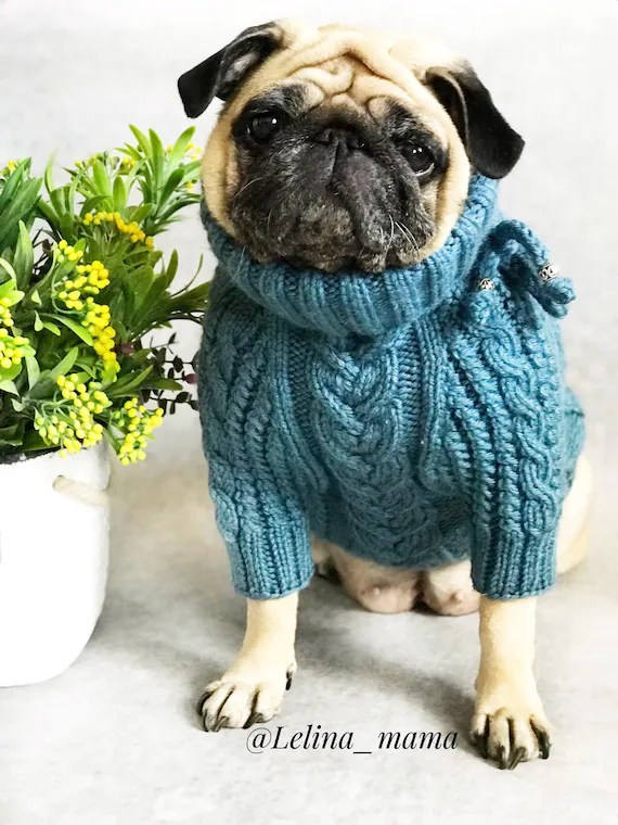 Sweater For Pug : sweater, Sweater