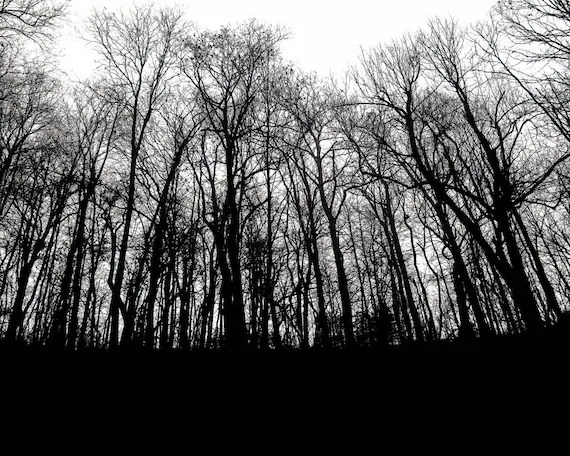 black woods photograph deep