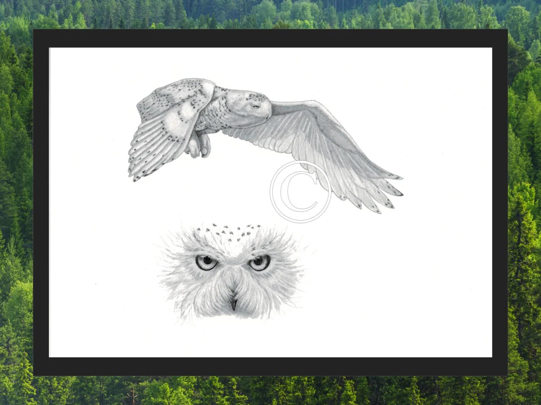 Snowy Owl In Flight Print