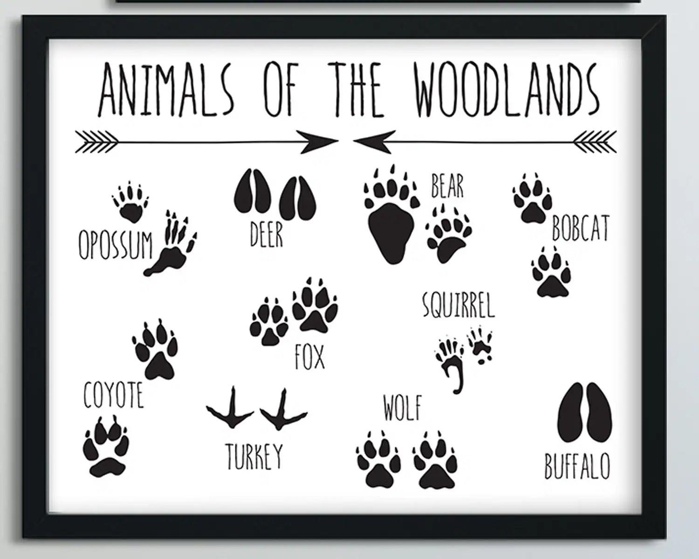 Animal Tracks Nursery Print Adventure Nursery Woodland