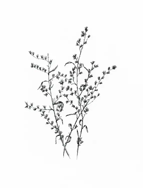 Original Floral Ink Illustration. Dry Flowers. Black Ink