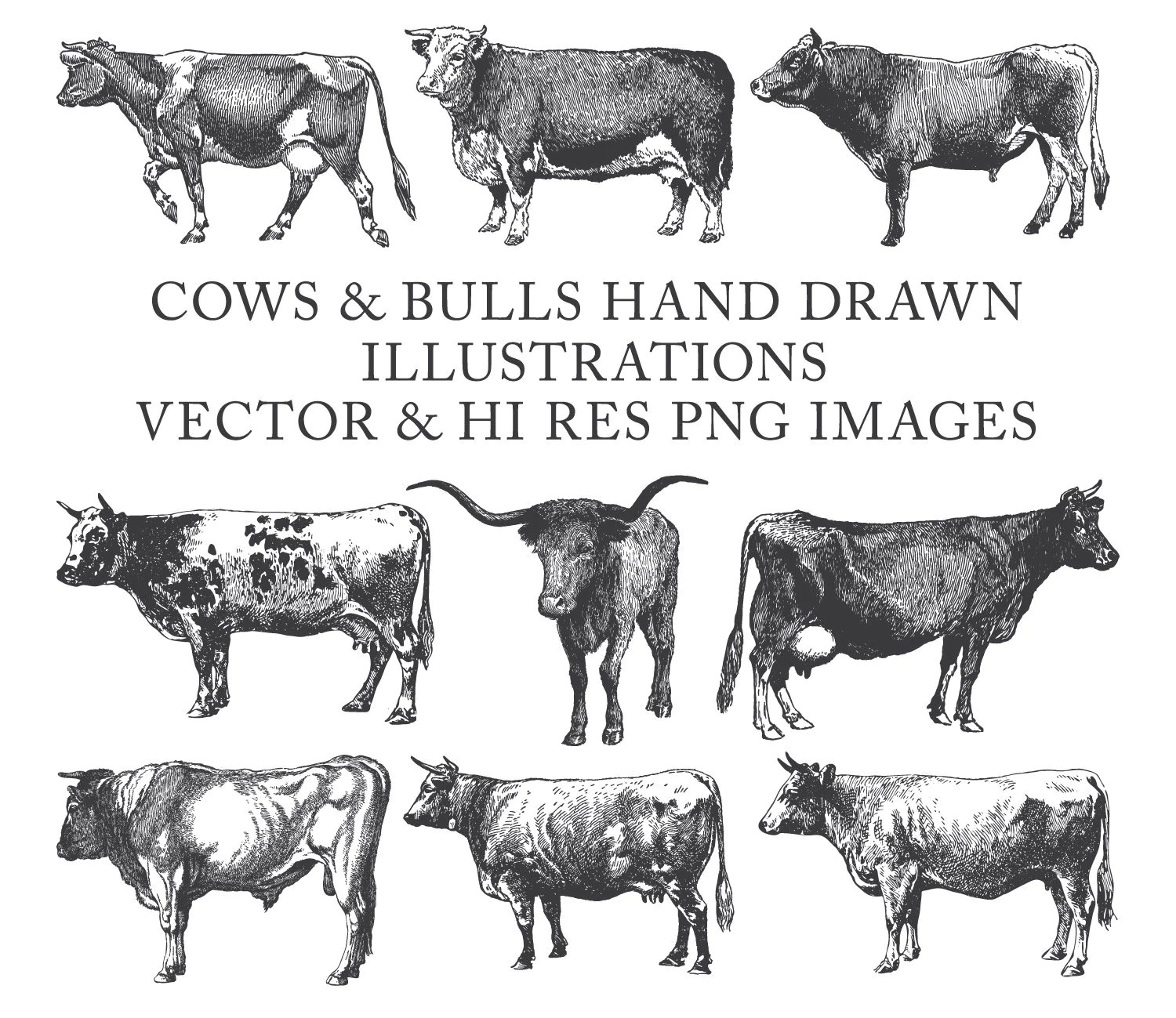 Cow Clipart Bull Clipart Farm Clipart Hand Drawn Engraving