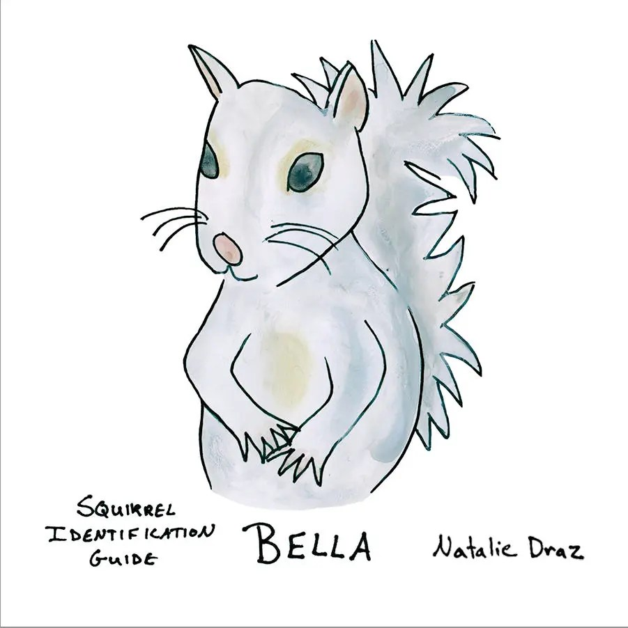 bella the white squirrel