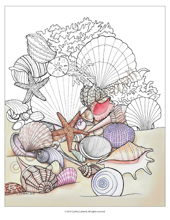 Seashell Coloring Page : seashell, coloring, Seashells, Coloring, Instant, Download
