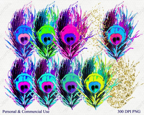 watercolor peacock feather clipart