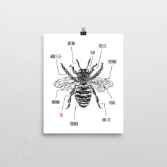 Hornet Anatomy Diagram 2000 Dodge Intrepid Parts The Bee Father Etsy You Re S Knees Wall Art Print Physical Day Honey Husband Gift Beekeeper Illustration Home Decor