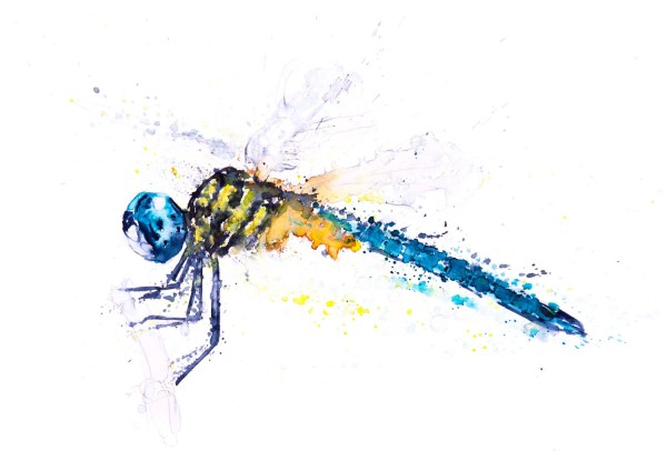 Dragonfly Watercolor Painting Watercolour - Signed Limited
