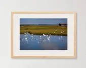 Herons at Two Mile Landing - Wetlands birds of the Jersey Shore, nature photography