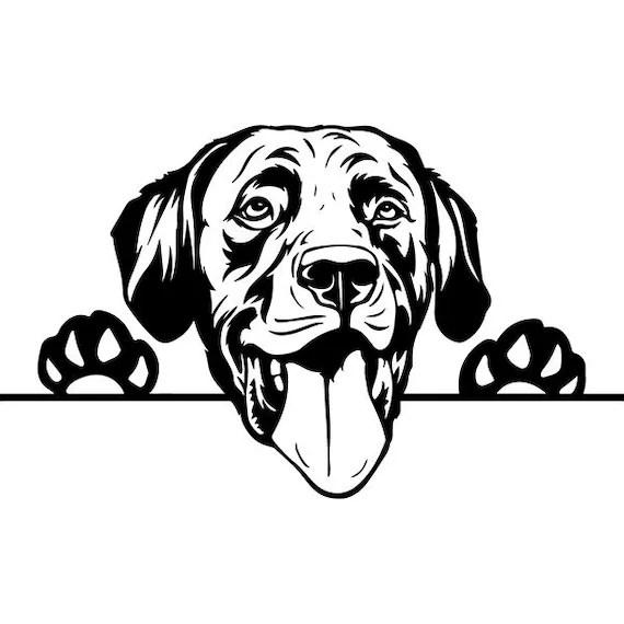 Labrador Retriever 10 Peeking Smiling Dog Breed K-9 Animal