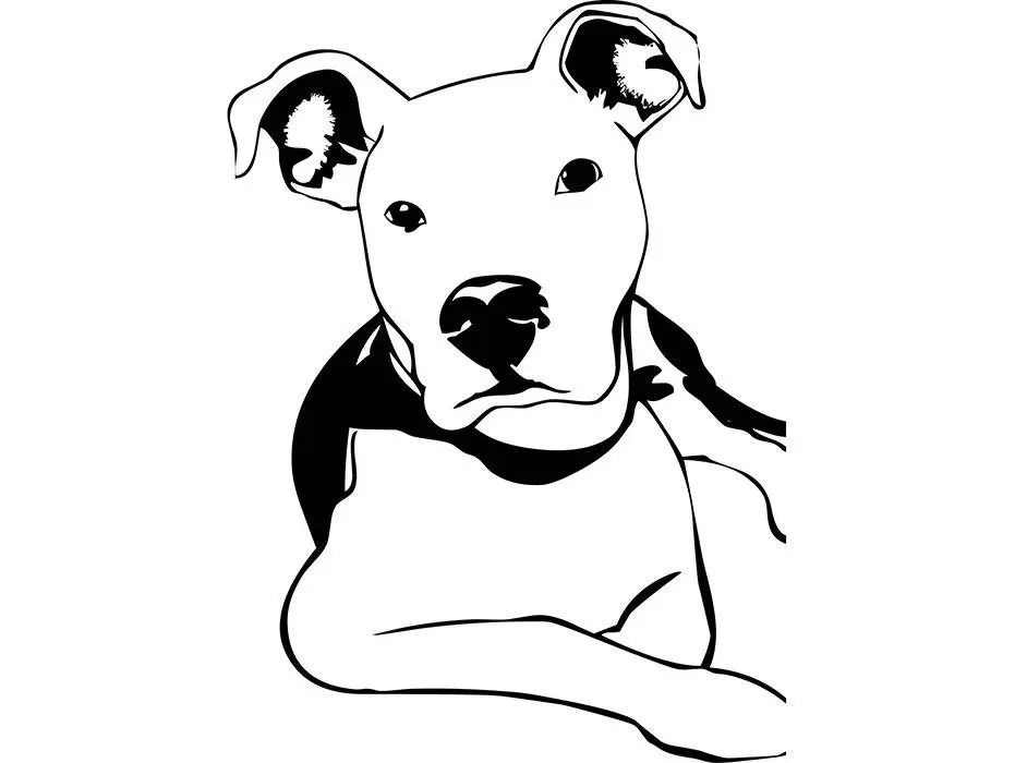 American Pit Bull 10 Pet Terrier Dog Breed K-9 Puppy Mean