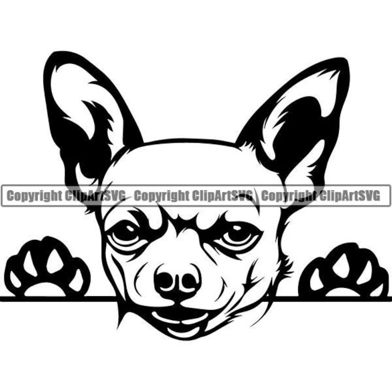Chihuahua 1 Peeking Dog Puppy Breed K-9 Animal Pet Hound