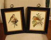 Set of framed vintage birds