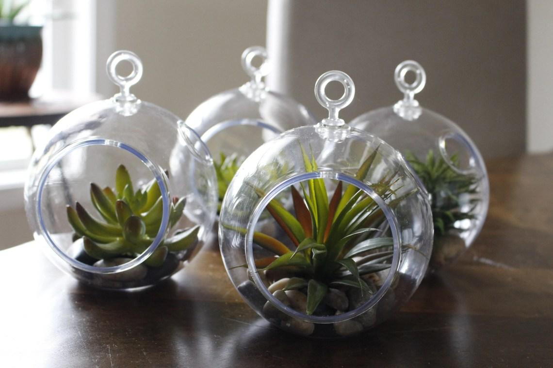 Succulent Globes
