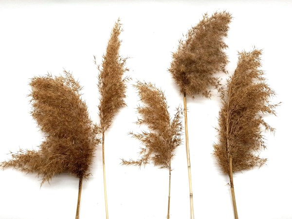 Mixed Sizes Pampas Grass Dried