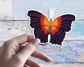 Rhinopalpa Polynece Butterfly 10cm Large Glossy Vinyl Sticker