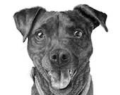 Custom pet portrait drawing in graphite