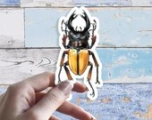 Stag beetle 8cm Large Glossy Vinyl Sticker, illustrated realistic stickers in coloured pencil, Odontolabis femoralis scientific illustration