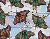 Colourful Spanish Moon Moth Large Glossy Vinyl Sticker