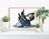 Giclée Art Print 'Afloat' -A4 size coloured pencil drawing by Wild Portrait Artist, realistic painting of a great crested grebe
