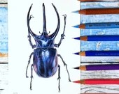 Giant Rhinoceros Beetle Original Art in coloured pencils, A6-size realistic drawing, scientific illustration - Chalcosoma chiron