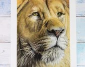 Giclée Art Print 'Proud' - A4 size soft pastel drawing by Wild Portrait Artist, wildlife realistic male lion painting closeup portrait