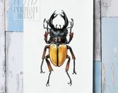 Giclée Art Print, Odontolabis femoralis - A4 size coloured pencil drawing by Wild Portrait Artist, painting of a stag beetle
