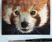 Curiosity - 3.5 x 2.5 inch Adorable miniature original painting of a realistic red panda in acrylics, Artist Trading Card, ACEO, ATC