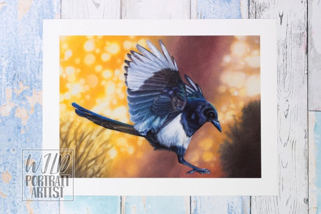Giclée Art Print 'Dance' - A4 size colored pencil drawing by Wild Portrait Artist, wildlife realistic magpie bird painting, corvid, crow