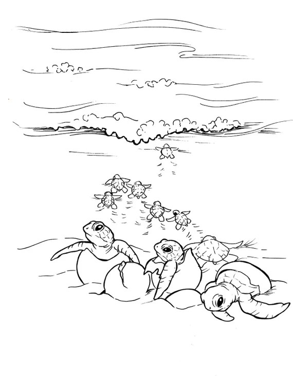 Sea Turtle Coloring Pages Etsy