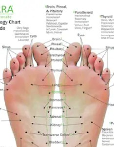 pack essential oil reflexology chart  use guide  on pt card stock also etsy rh